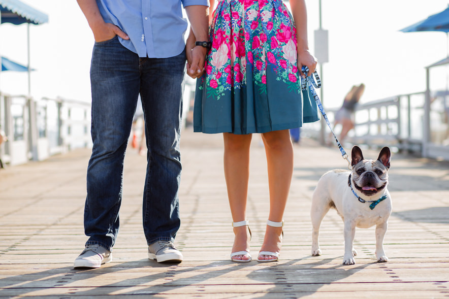 close up of the couple's french bulldog standing on the pier